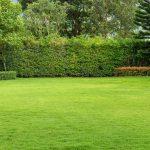 Obecność eko-środków ochrony roślin w usługach ogrodniczych