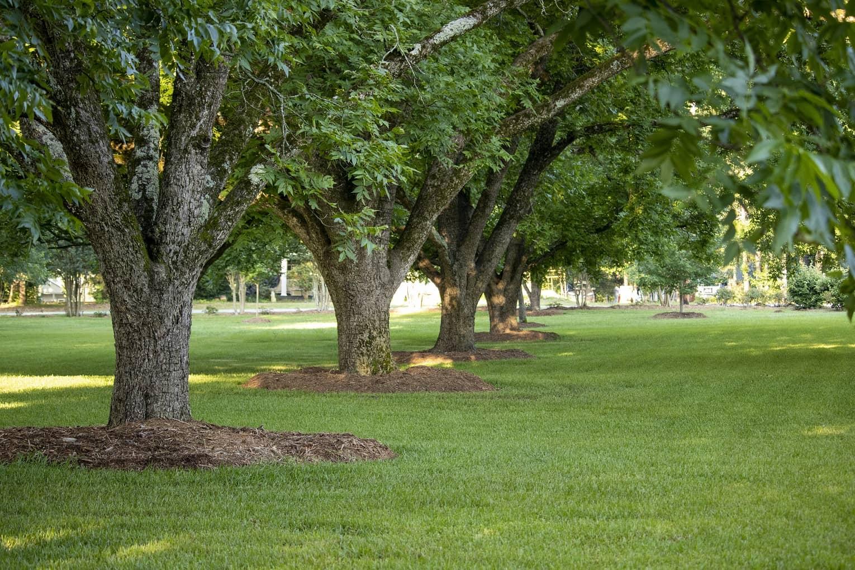 Piękne ogrody z drzewami liściastymi i iglastymi – praktyczne porady