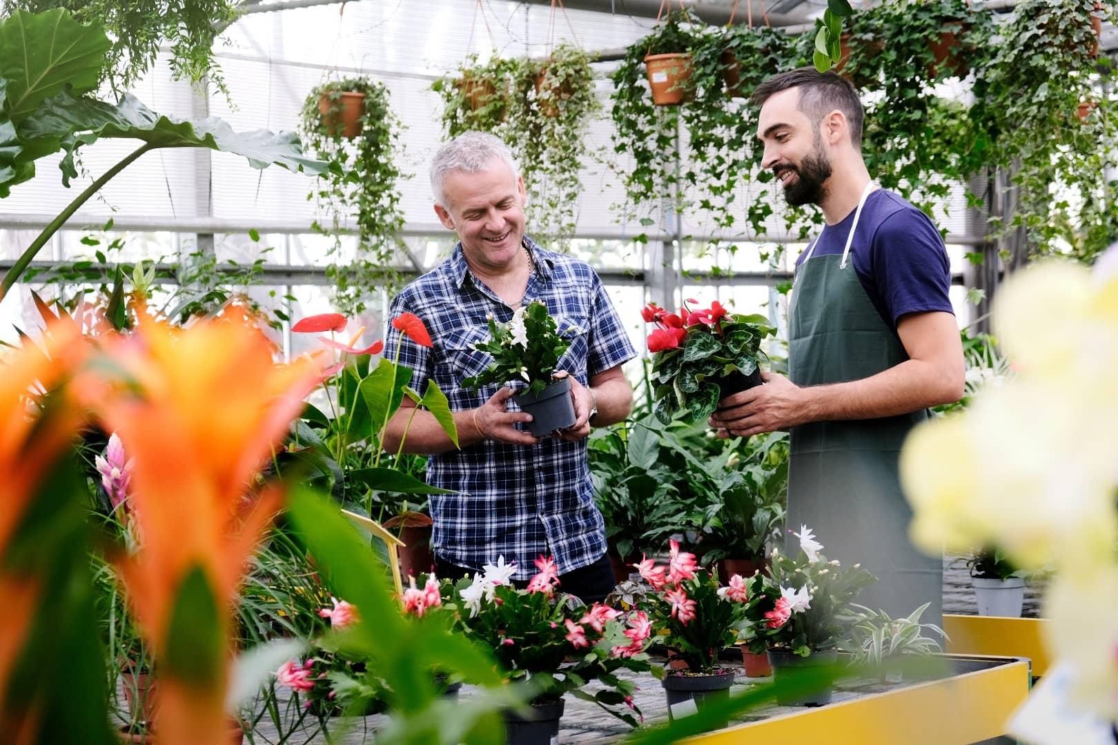 Przesadzaj doniczkowe rośliny ozdobne zgodnie z ich potrzebami