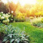 Zakładanie ogrodów w profesjonalnym wydaniu