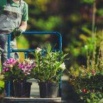 Ze sklepu ogrodniczego do ogrodu
