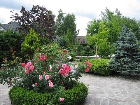 zdjęcie ogrodu